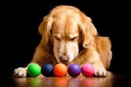 Dog choosing